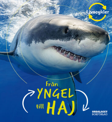 Book Cover: Från yngel till haj